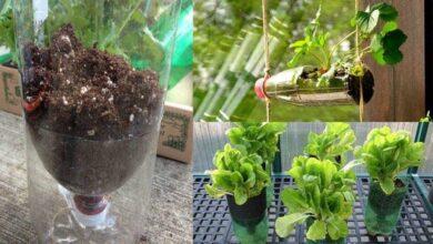 Foto de Como cultivar 12 alimentos em garrafas plásticas