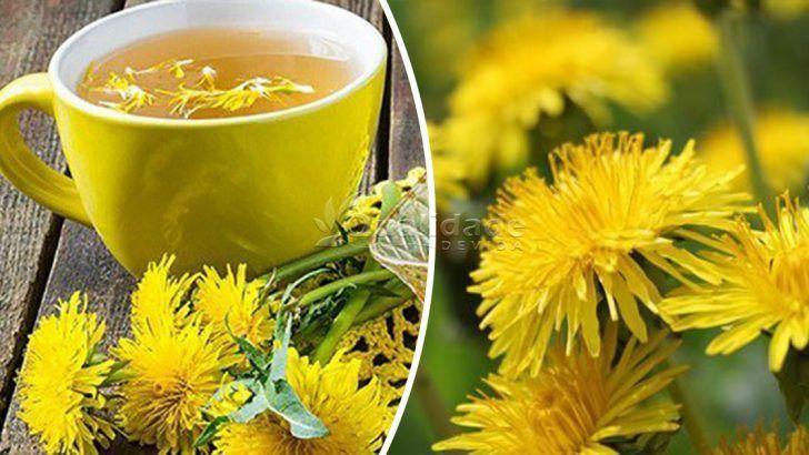 Chá de Dente de leão: trata diabetes, fígado gordo e muito mais