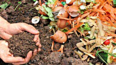 Saiba como preparar quatro tipos de fertilizantes orgânicos para turbinar as suas plantas