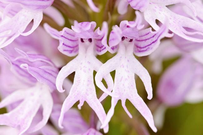 Flores incríveis (7)
