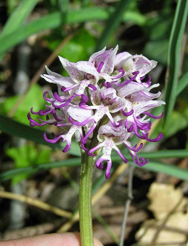 Flores incríveis (8)