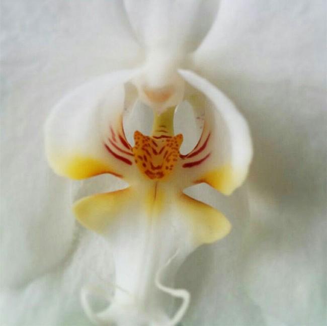 Flores incríveis (22)