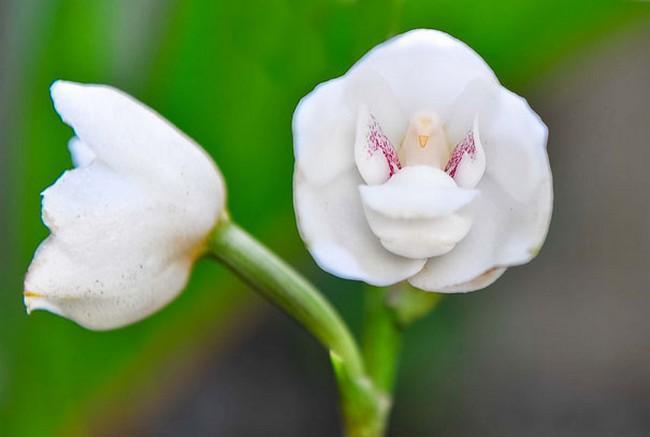 Flores incríveis (27)