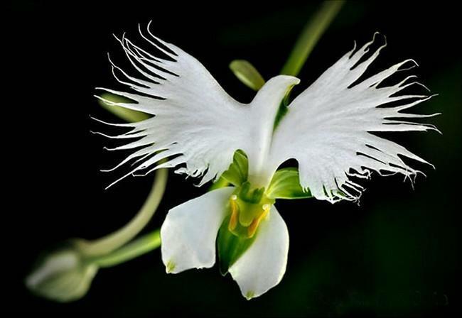 Flores incríveis (31)