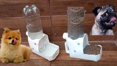 Foto de Como Fazer Bebedouro e Comedouro Automático Com Garrafa Pet