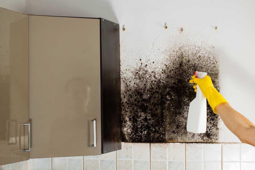 5 maneiras práticas e infalíveis de tirar mofo