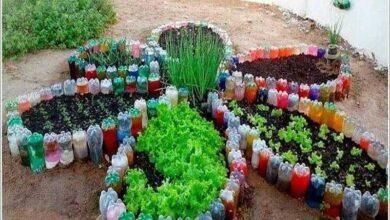 Como fazer horta em forma de flor usando garrafas pet
