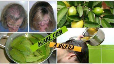 Foto de Folhas da goiabeira evitam 100% da queda do cabelo e o fazem crescer rapidamente