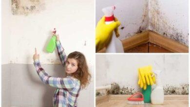 Saiba como eliminar a umidade e o mofo das suas paredes