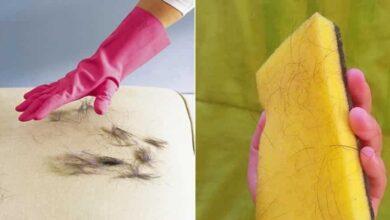 Foto de 3 Dicas de como remover pelos de animais do sofá