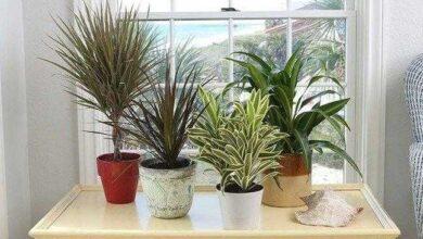 Foto de 5 plantas para se ter em casa e que não requerem muitos cuidados