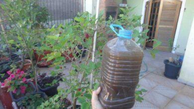 Foto de Com este adubo natural suas plantas vão florir em 15 dias