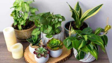 Plantas de proteção para afastar más energias do seu lar
