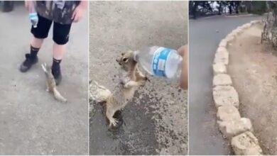 Esquilo com sede implora para garoto por um pouco de água