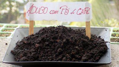 Como fazer adubo com pó de café usado