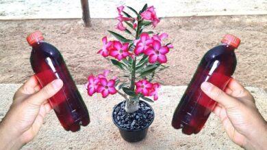 Faz florir em pouco tempo (qualquer planta sem gastar nada)