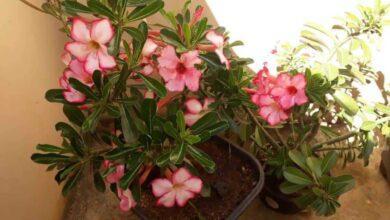 Foto de Melhor Adubo Para Floração de Plantas