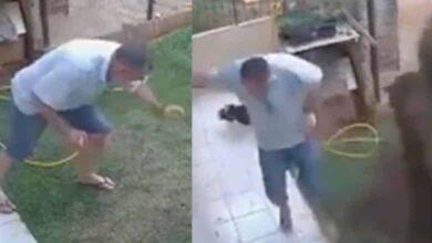 Foto de Oops: Homem explode completamente o jardim depois que ele tenta se livrar de uma barata