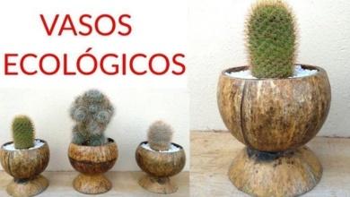 Foto de Vasos Sustentáveis Feito de Casca de Coco