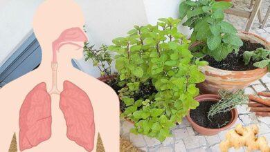 10 ervas e raízes que ajudam a cuidar da saúde dos pulmões