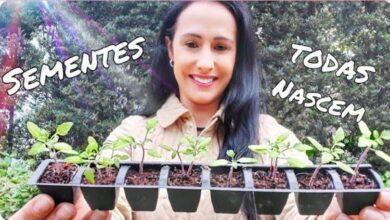 Meu Segredo para fazer Mudas de Plantas