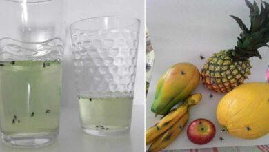 Receita caseira para acabar com mosquitinhos das frutas