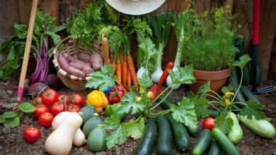10 Legumes fáceis de cultivar e rápidos para produzir
