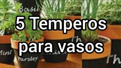 5 Temperos para Cultivar em Vasos