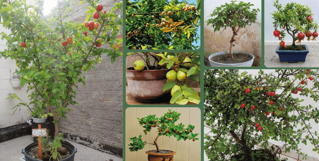 Plantas fáceis de cultivar em vaso