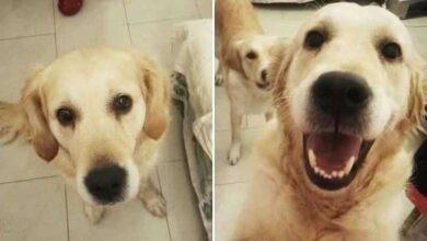 """26 fotos do antes e depois de animais serem chamados de """"bom garoto"""""""